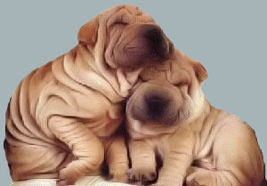 http://www.rattlesnakeridgeranch.com/images/sharpei.jpg